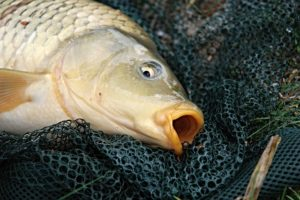 how to carp fishing tips
