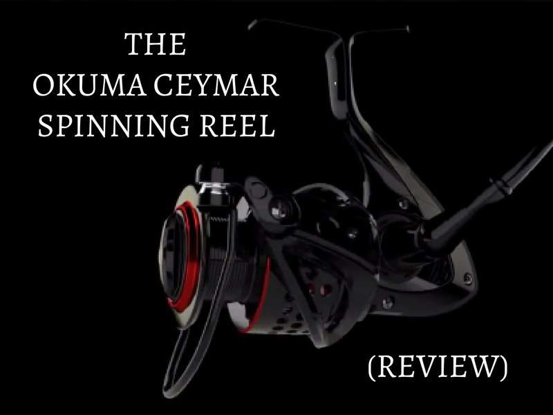 okuma ceymar review best spinning reel under 50