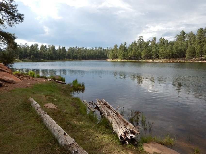 trout fishing locations in arizona