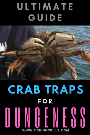 dungeness crab being held in a mans hand