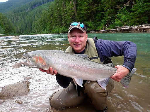 large steelhead caught in copper river