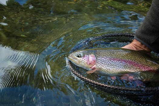 Trout Rig And Line Setup: A Simple How-To-Guide