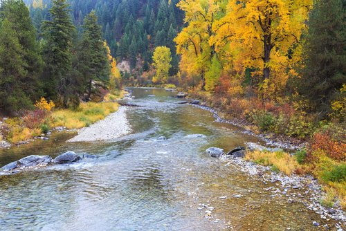 trout fishing clark fork river montana