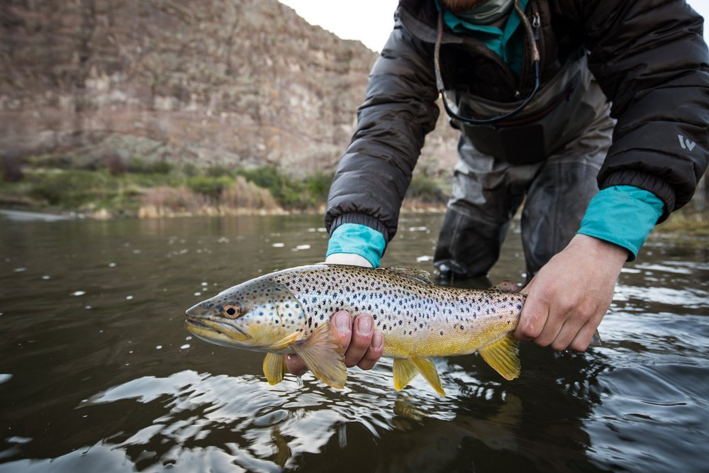 trout fishing in montana