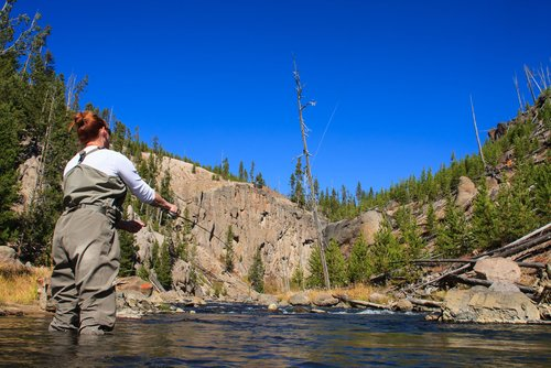 fly fishing for trout madison river montana