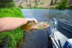 trout fishing deschutes river oregon