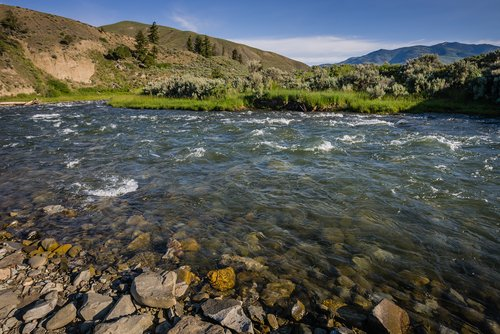 trout fishing yellowstone river montana