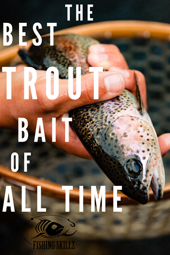 best bait for trout of all time