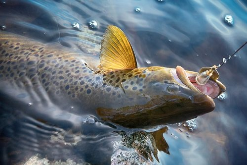 trout fishing with lures