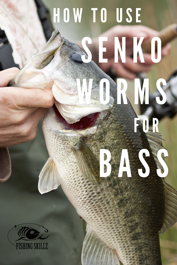 bass fishing senko worms