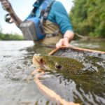 fly fishing in stream with brown trout in net