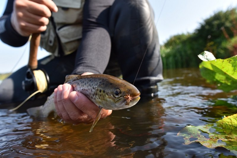 man holding trout caught fly fishing