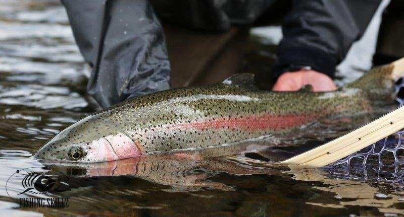 rainbow trout fishing for beginners
