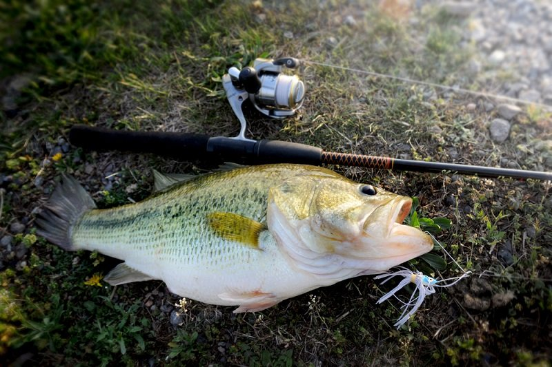 what do largemouth bass eat