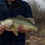 largemouth bass caught by angler